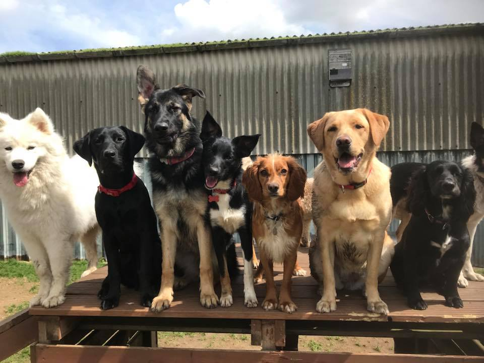 Creche dogs